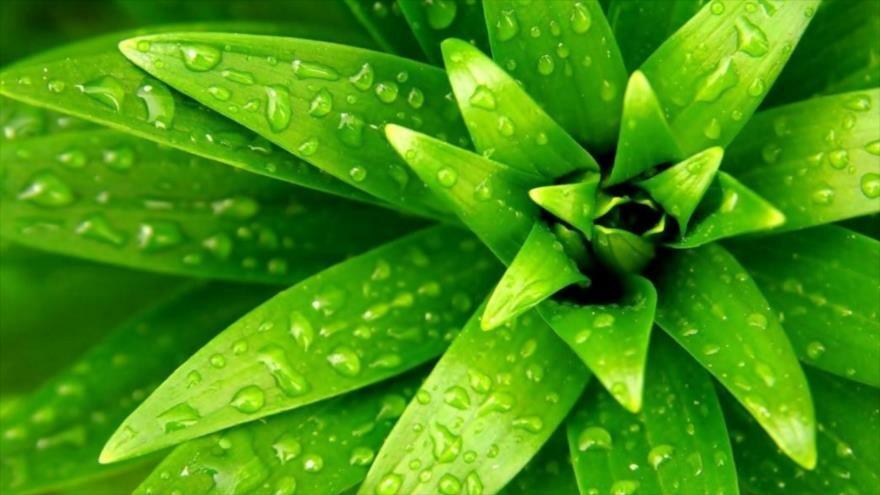 colageno-vegetal