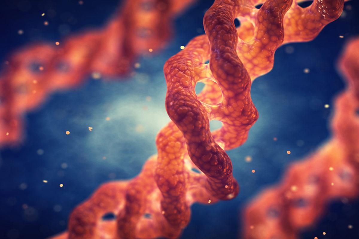 Colágeno hidrolizado –¿Qué es y cómo tomarlo? Efectos, beneficios y contraindicaciones