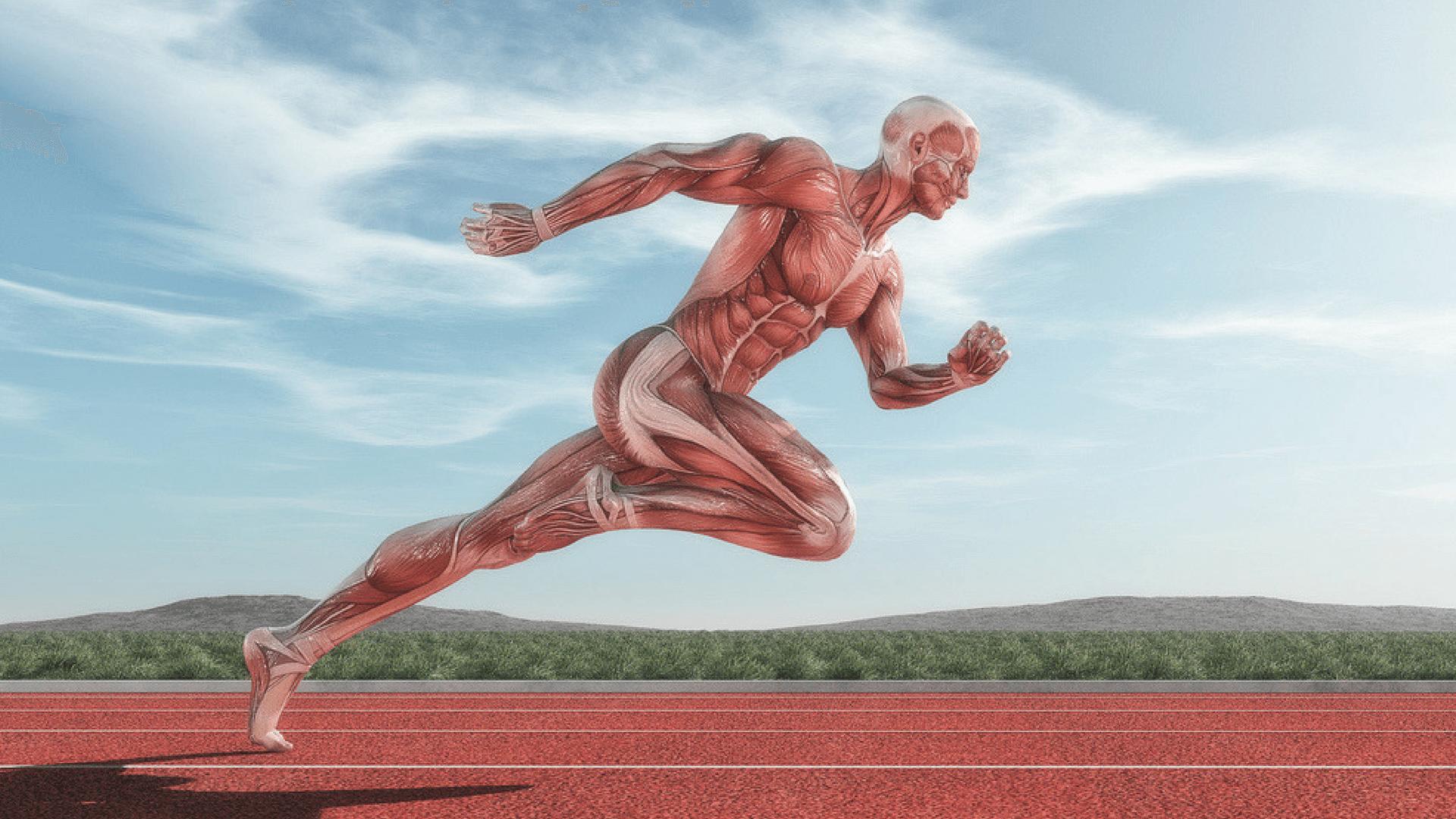 Tipos de fibras musculares – Diferencias entre fibras rojas y blancas
