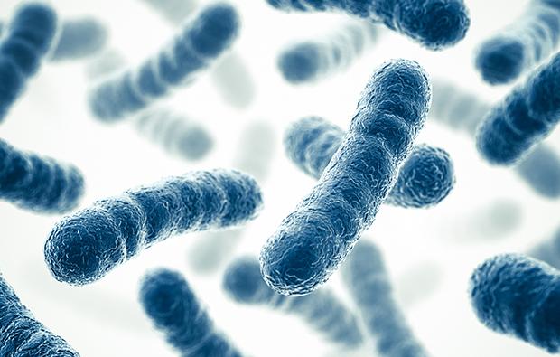 probioticos efectos