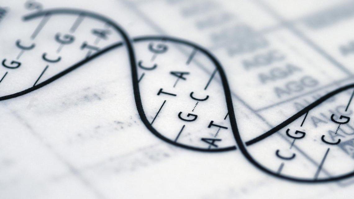 Potencial genético muscular – ¿Cómo saber si tienes buena genética?