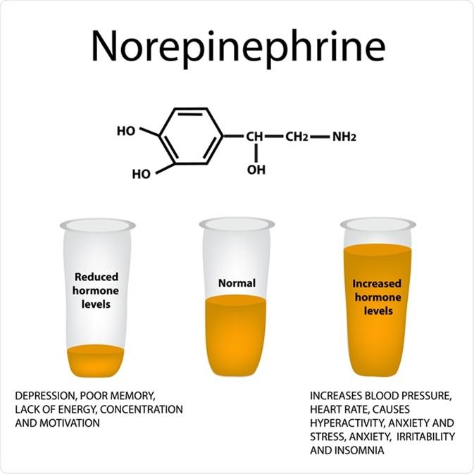norepinefrina-funcion