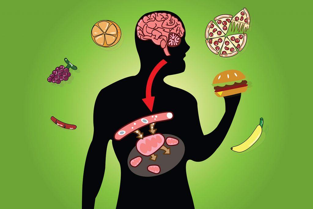 que es el metabolismo basal