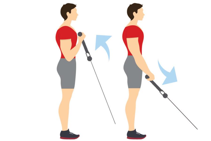 biceps 3 dias a la semana