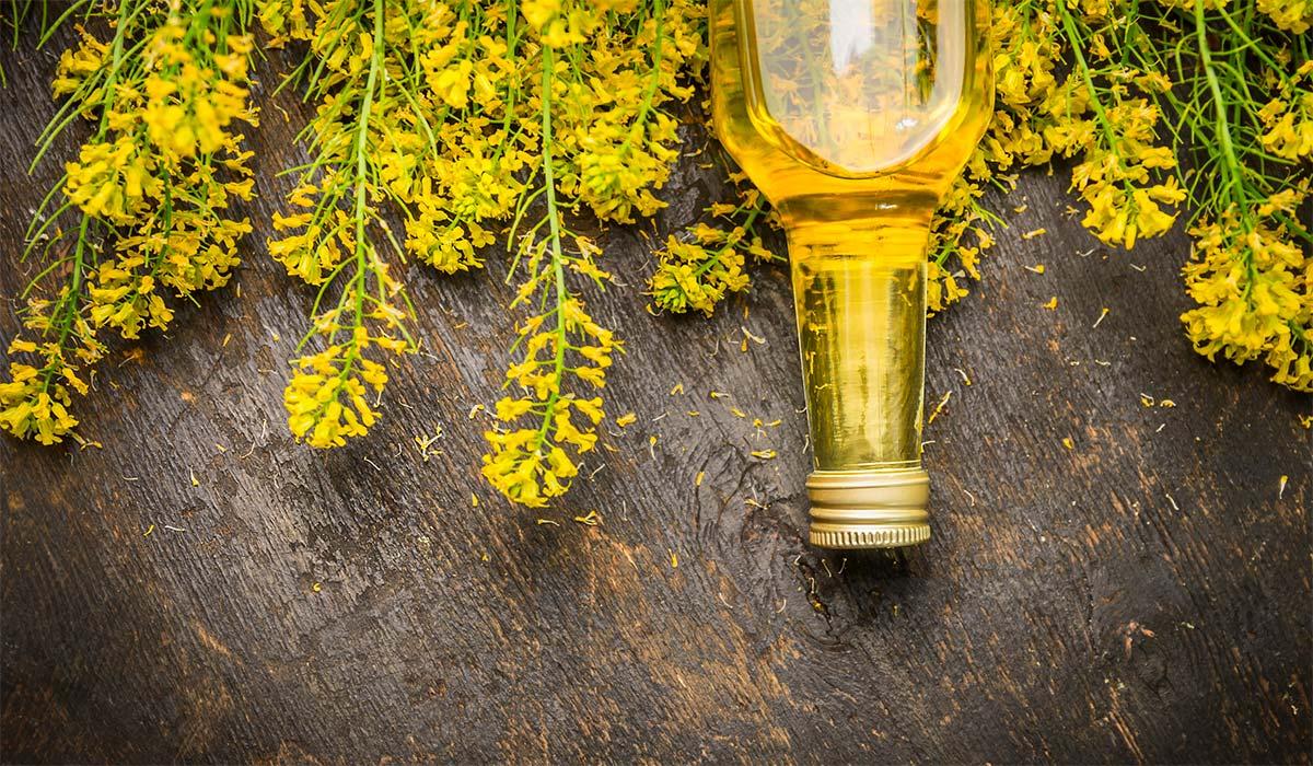 Aceite de canola – Beneficios, propiedades y contraindicaciones ¿Es saludable o hace mal?