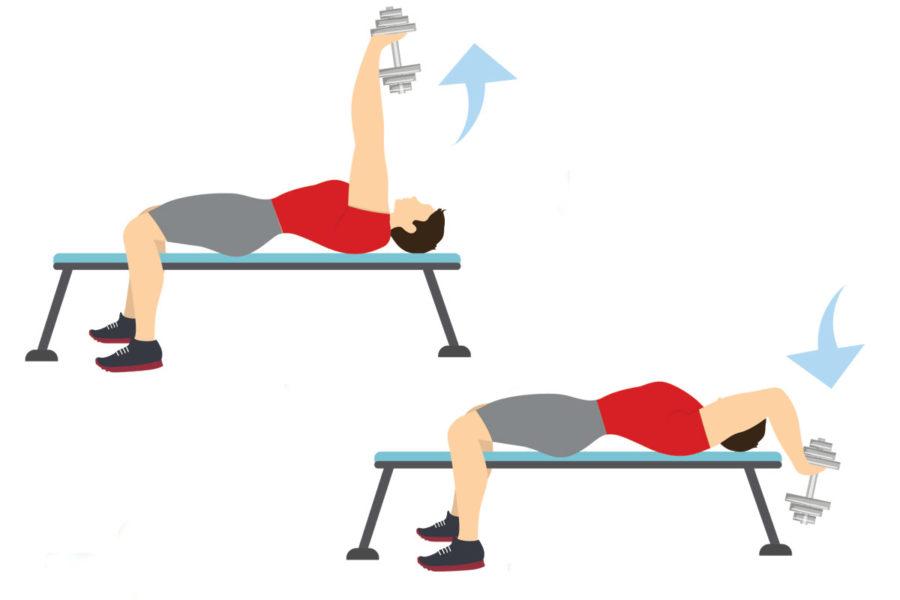 rutinas de musculacion