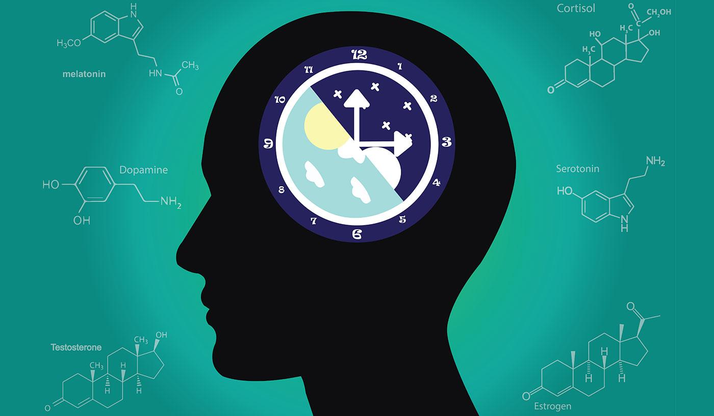 Inductores del sueño – ¿Cuáles son los efectos de las hormonas en los biorritmos del cuerpo?