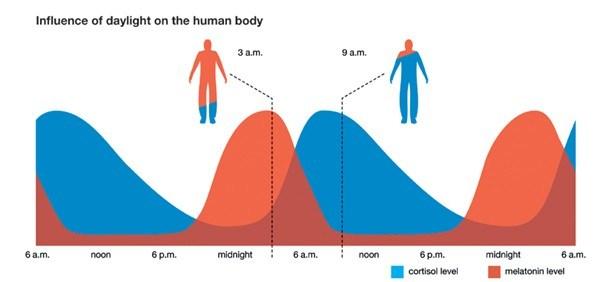 inductores del sueño hormona biorritmos