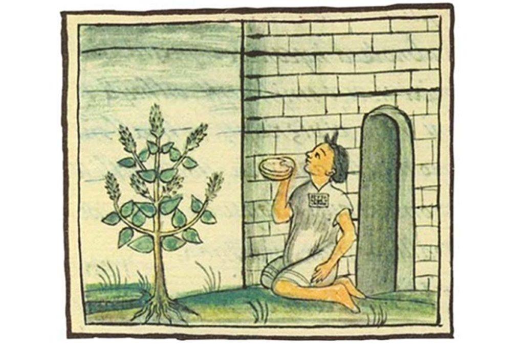 semillas de chia historia