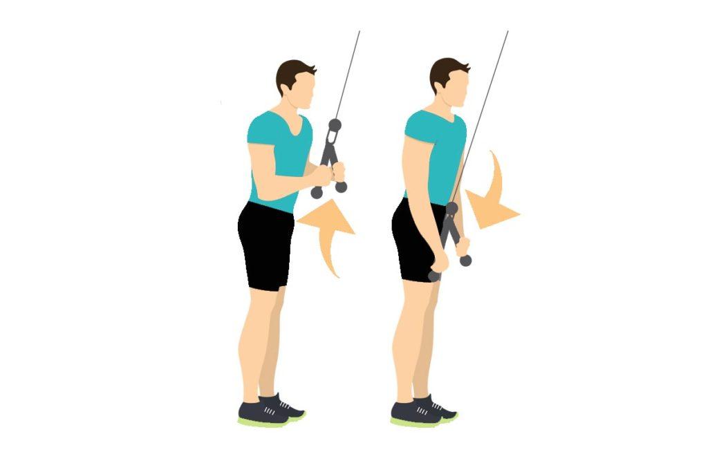 ejercicios para triceps gimnasio