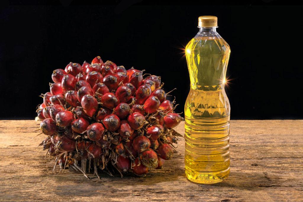 aceite de palma usos propiedades productos daños