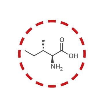 funcion aminoacidos esenciales isoleucina