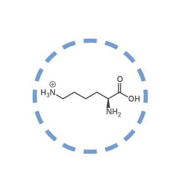 funcion definicion aminoacidos esenciales