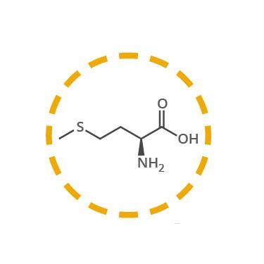 metionina funcion aminoacidos