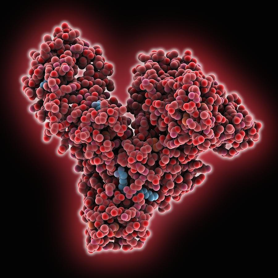 proteínas de alto valor biologico alimentos