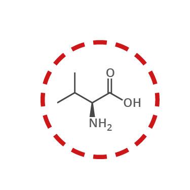 aminoacidos esenciales funcion