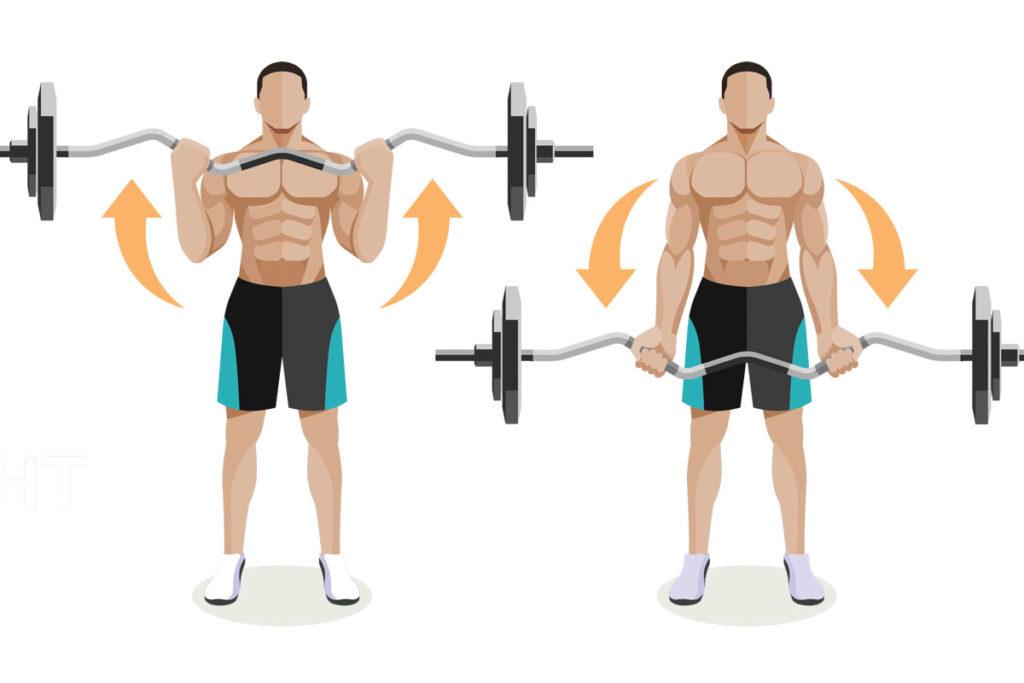 rutina para biceps ectomorfos