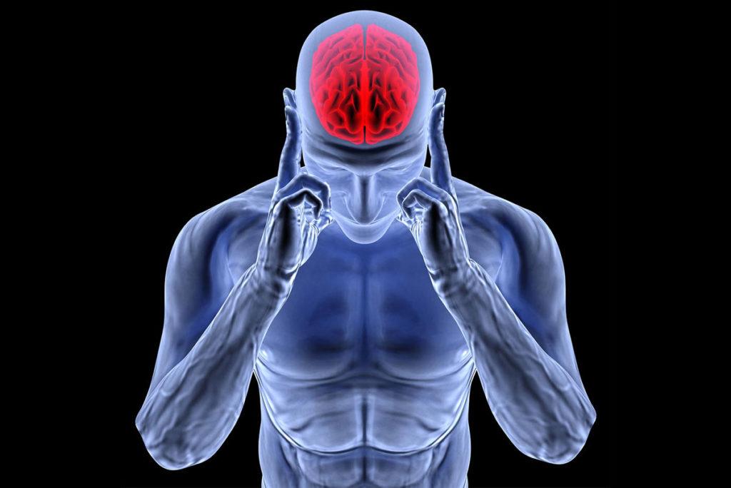 conexion neuromuscular