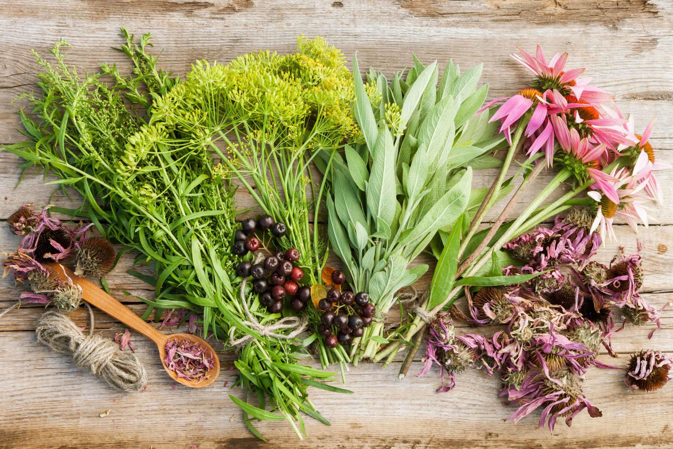 Plantas antivirales –  8 ejemplos con actividad comprobada por la ciencia