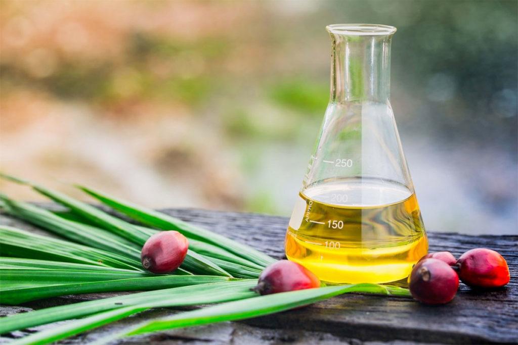 grasas saturadas en alimentos vegetales