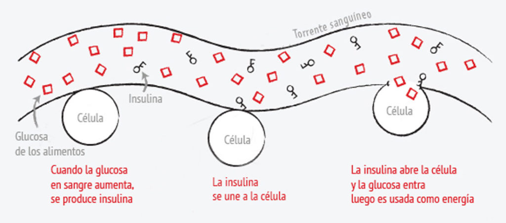 como funciona la insulina explicacion bien facil
