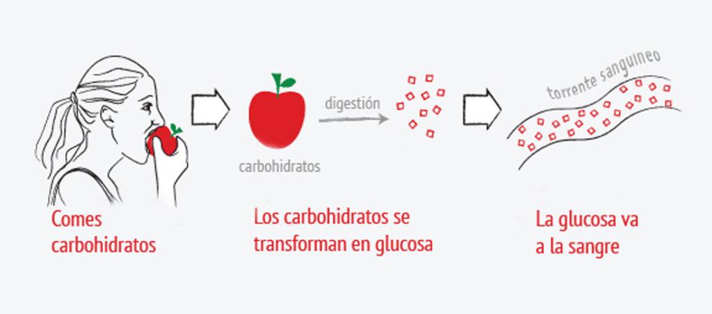 carbohidratos e insulina
